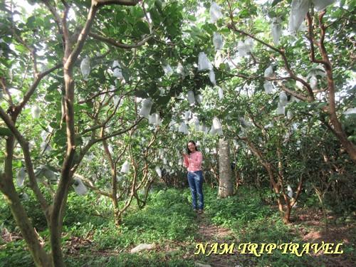 tour du lịch vườn trái cây 1 ngày giá rẻ